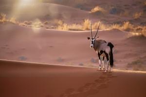 voyage-namibie-2021